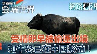 受精卵早被偷運出境 和牛恐已在中國繁殖!-李四端的雲端世界(網路獨播版)