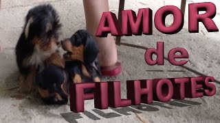 Amor De Filhotes - Yorkshire E Salsicha Dachshund - Puppies Love  - Amor Cachorros