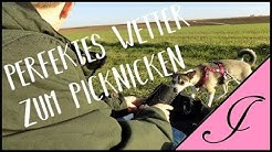 Picknick mit den Hunden // Jamy's life // Einfach geiles Wetter