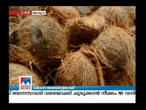 Vegetable export to Qatar increased from Kerala | Manorama News