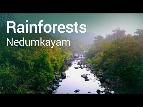 Nedumkayam Rainforests