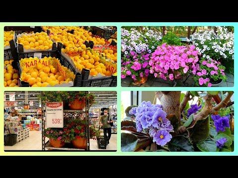 Четыре месяца не были в Глобусе Почем фрукты Цветы в квартире Упала в теплице Покупки