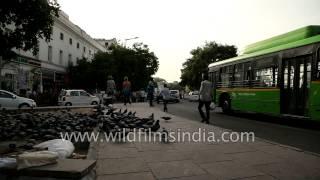 Flock of Pigeons eat grains - Old Delhi