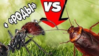 Муравьи гиганты принимают роды и ловят тараканов