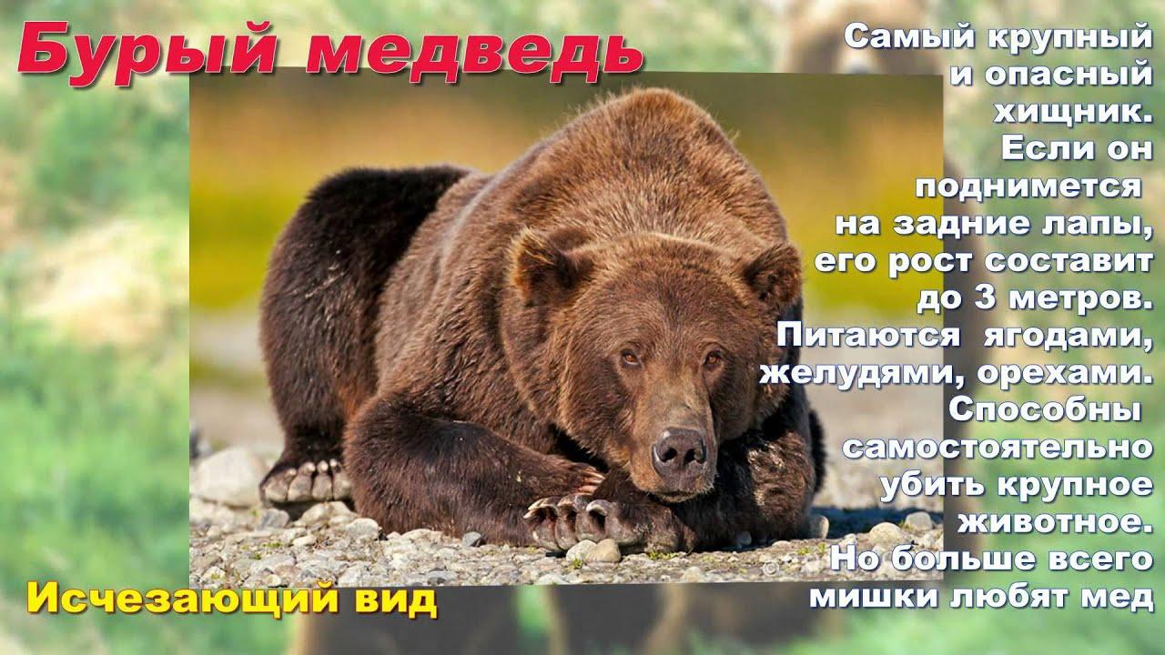 Скачать презентацію тварини червоної книги україни