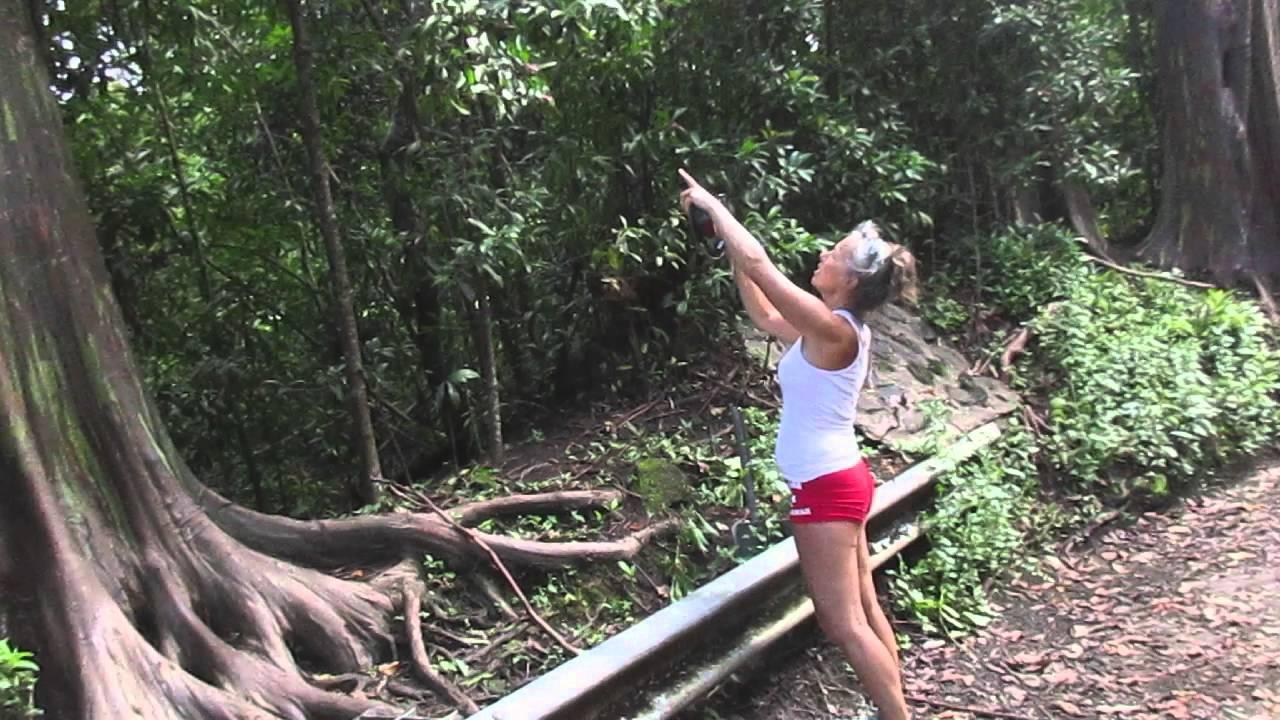 rainbow gum eucalyptus trees near hana on maui youtube