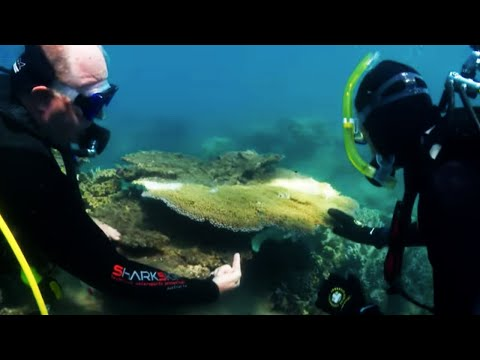 Killing Star Fish To Save The Great Barrier Reef - Australia With Simon Reeve - BBC