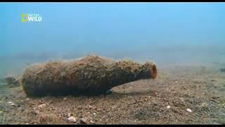 Тайны океана  Подводный мир  Документальный фильм National Geographic
