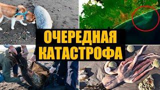 Экологическая катастрофа на Камчатке. Что произошло?