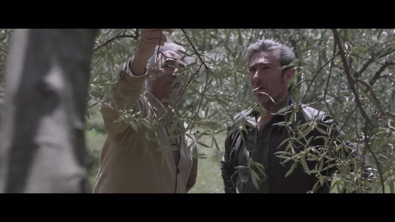L'huile d'olive au Quai des Oliviers : une histoire de rencontres et de partages.