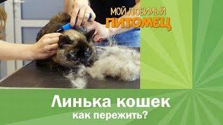 Как бороться с линькой у кошек?