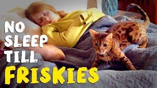 No Sleep Till Friskies®