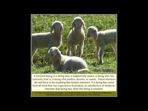 Animal Rights Quotes - Prof. Gary L. Francione (No. 2)