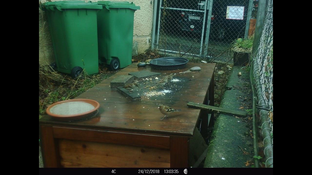 Wildkamera Tedura 24122018 Mein Kleinea Garten Gewusel Youtube