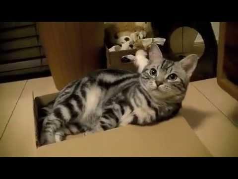 【猫記録137】「え?なんのこと?」寝てないアピールをする猫-I don't sleep