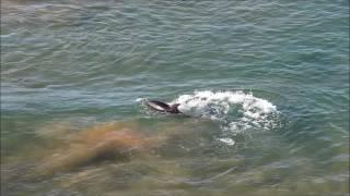 Дельфины Крым, поселок Яковенко