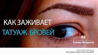 После татуажа. Видео отчет по дням.(, 2016-08-21T10:05:20.000Z)