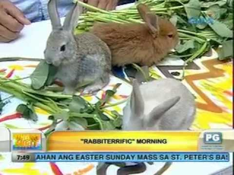 Unang Hirit: Rabbiterrific Morning