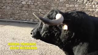 Encierro Brihuega... Ferias 2018 (Sabado)