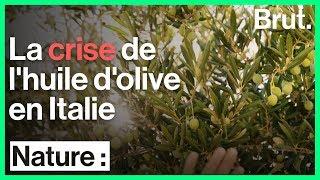 La crise de l'huile d'olive en Italie