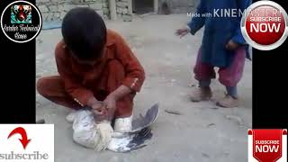 Children Cut Chicken Neck With Knife.