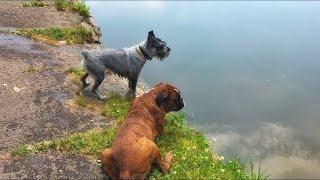 А ваша собака умеет плавать?