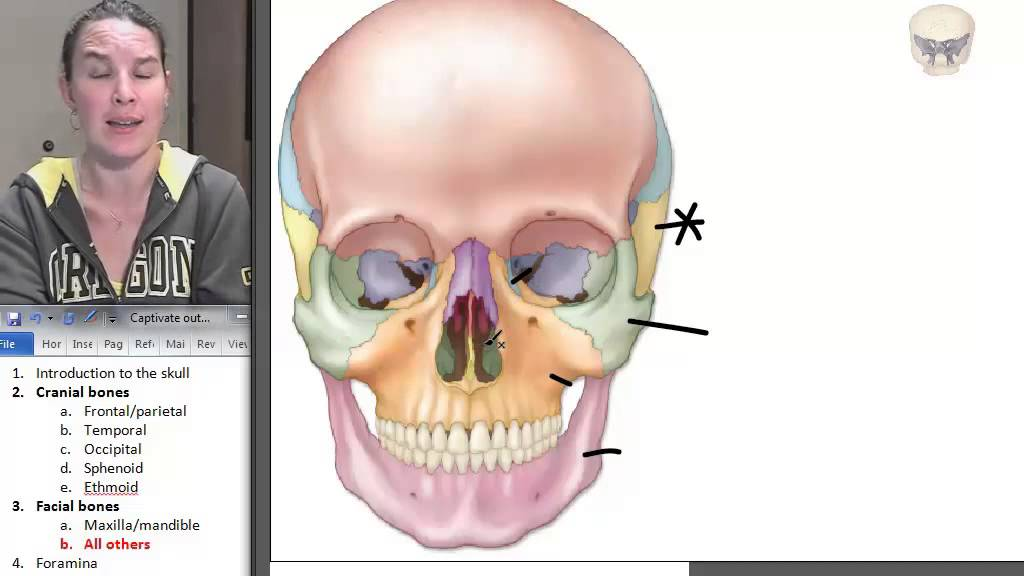 Facial Bones Skull Human Anatomy Course Youtube