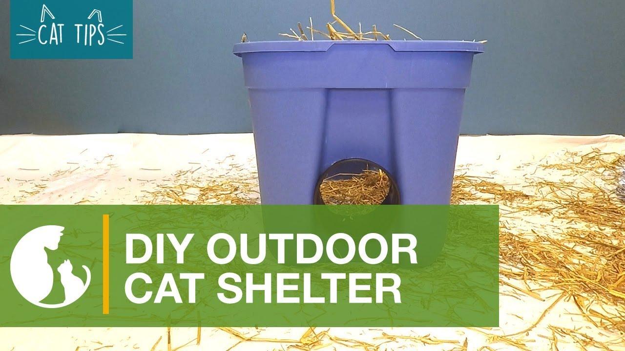 Cat Tips Diy Cat Shelter