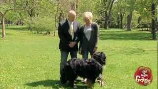 Dog Eats Cell Phone Prank