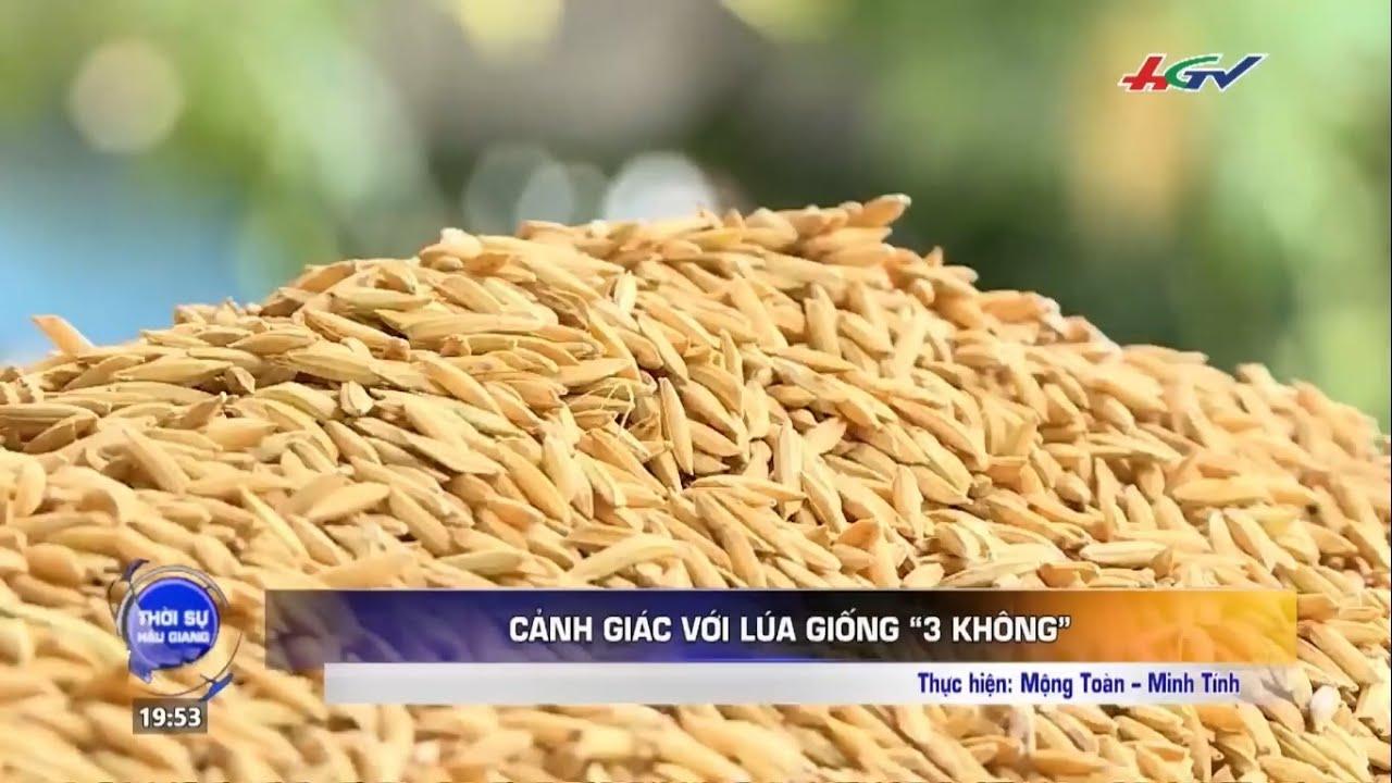 Cảnh giác với lúa giống giả: Không nhãn hàng hóa, Không nguồn gốc xuất xứ, Bao trắng.