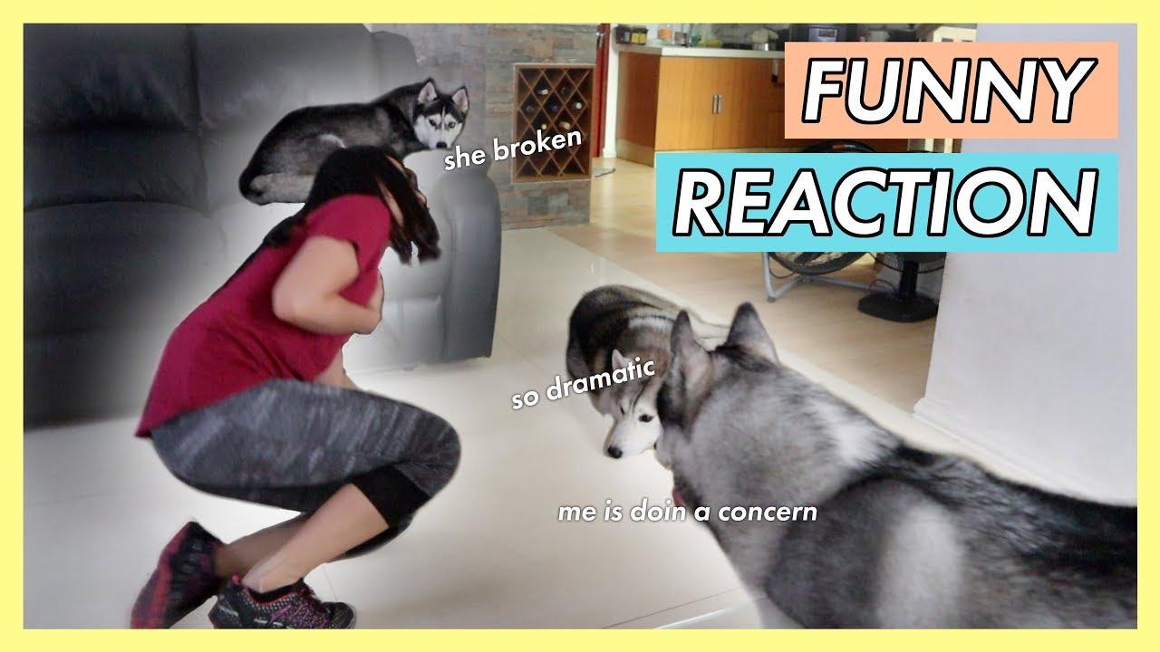 Husky Dogs Philippines