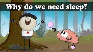 Why do we sleep? | It's AumSum Time