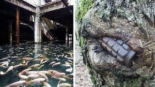 Beweise, dass die Natur die Kontrolle über verlassene Orte übernimmt!