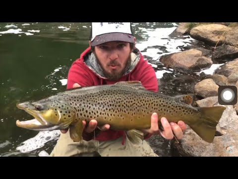 Deschutes River Fly Fishing Giant Brown Trout