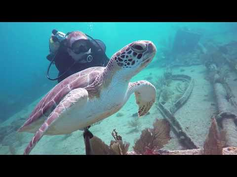 Scuba Diving in Key Largo, Florida: Molasses Reef, French Reef, Benwood & Spiegle Grove dive sites