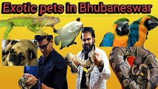 BEST EXOTIC PET SHOP IN,BHUBANESWAR |Thinking to buy a pet|  #vlog 4 #Bhubaneswar #Odisha #Pets