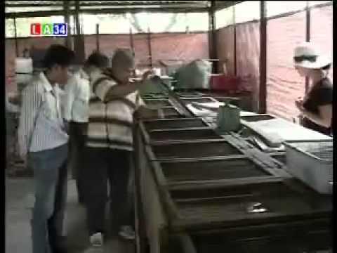 Kỹ thuật nuôi thỏ sinh sản
