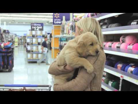 The Puppy Project: Puppy Shopping on #NationalPetDay