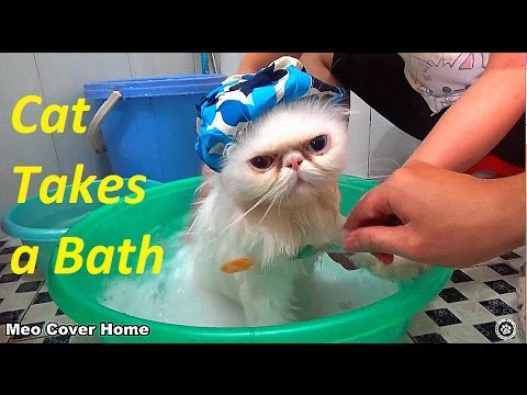 Cat S Bath Time I Think Cats Saying Quot No Quot To Bath Meo