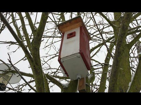 Nest box cam