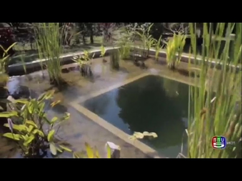 The First Tropical Organic Pool In Thailand Youtube