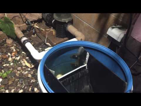 DIY Koi Pond Sieve Filter