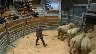 Le marché aux bestiaux de St-Christophe-en-Brionnais tourne au ralenti