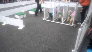 ドッグレースを初めて生で見ました。 競争犬として 完璧に調教されてん...