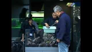 Мастер-класс от Такаши Амано 1(Такаси Амано в деле! Как правильно оформлять аквариум. AquaClean™ Сайт http://aquaclean.kiev.ua/, 2013-04-14T22:48:55.000Z)