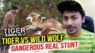 Tiger Salman Khan To FIGHT With Wild Wolves In Tiger Zinda Hai | Real Stunt DETAILS