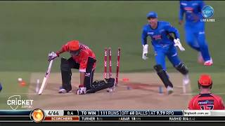 Adil Rashid's 16 wickets in the Big Bash 2016