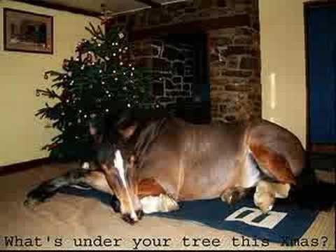 Merry Christmas To the horses - YouTube