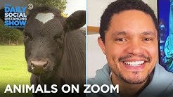 California Animals Join Zoom Calls   The Daily Social Distancing Show