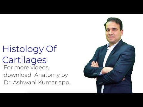 HISTOLOGY OF CARTILAGES by Dr Ashwani kumar